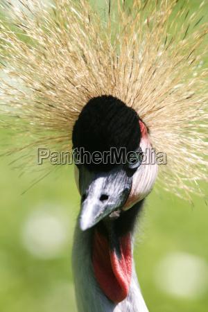 animal bird animals portrait birds cranes