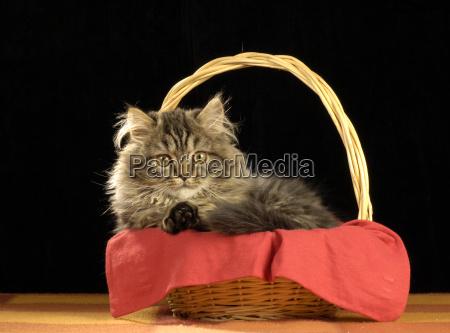 studio photography animal pet mammal bed