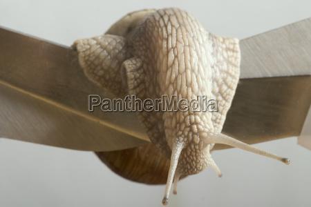 tool tools risk animal mollusc fauna