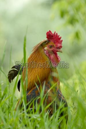 animal pet bird fauna animals pets