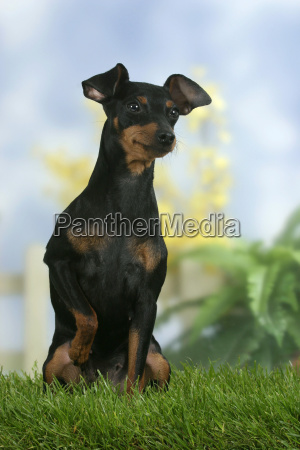 studio photography female animal pet mammal