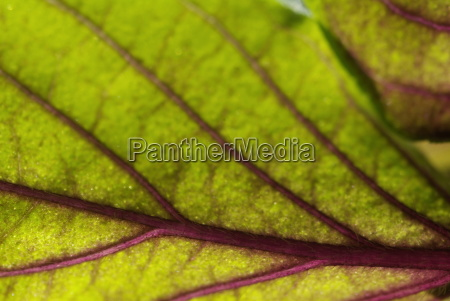 leaf closeup water mediterranean salt water