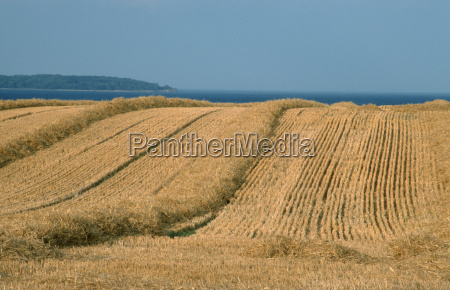 summer summerly europe denmark fields stubble