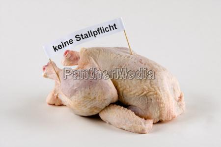 chicken bird avian flu pandemic ill