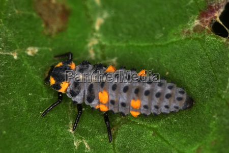 animal insect insects fauna animals animal