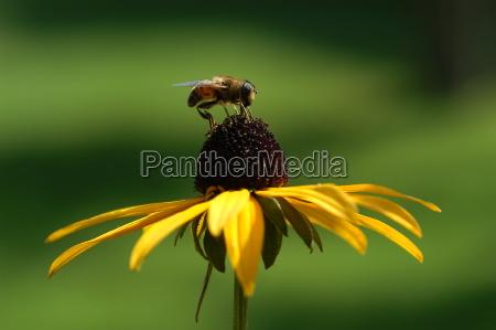 bee on sun hat