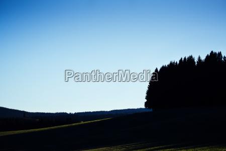 forest cloudless sky sun