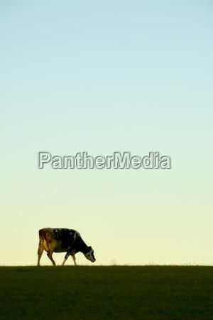 cow meadow sky