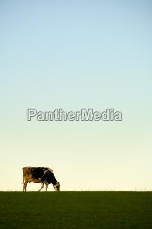 cow meadow sky pastel