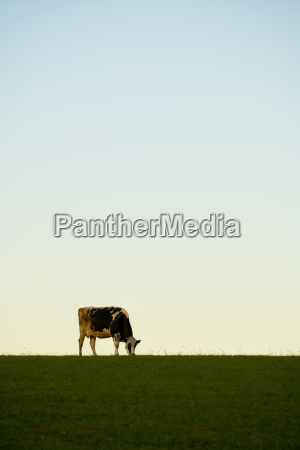 cow sky grass