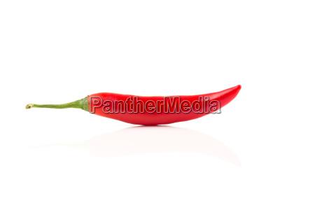 fresh red chili on white background