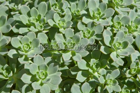 green succulent plants form interesting pattern