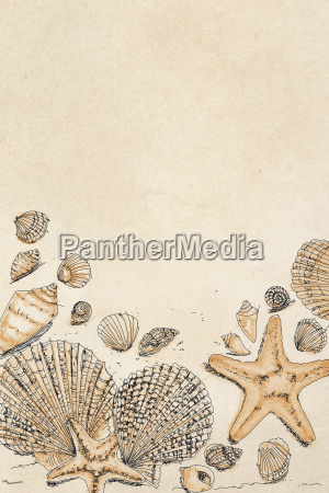 drawings of shells and with starfish