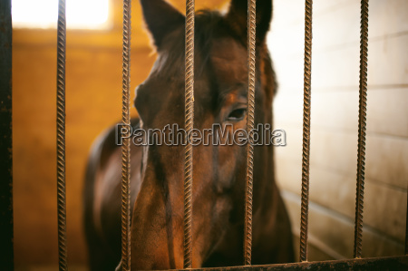 horse in a stall in the