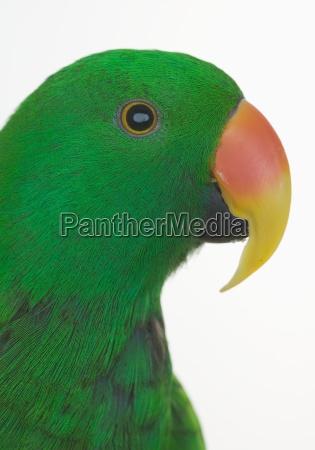 profile of green bird