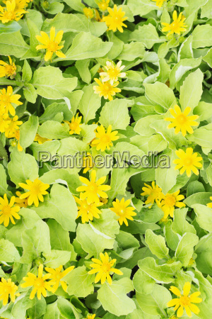 overhead view of yellow flowers