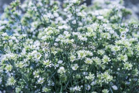 white cutter flowers in garden