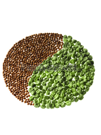 studio shot of cardamom seeds and