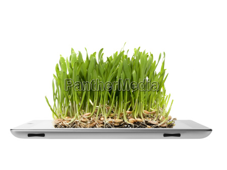studio shot of grass growing on