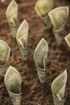 one hundred dollar bills in soil
