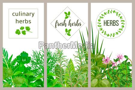 farm fresh cooking herbs set of