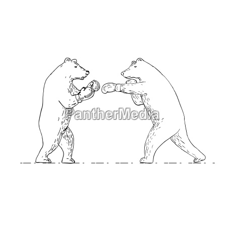 two grizzly bear boxers boxing drawing