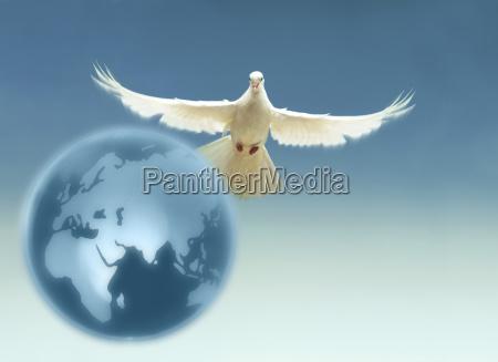 white dove above terrestrial globe