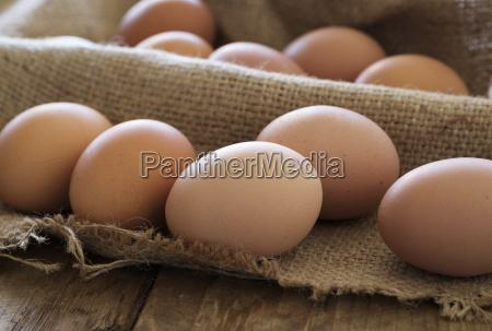fresh animal eggs on wood