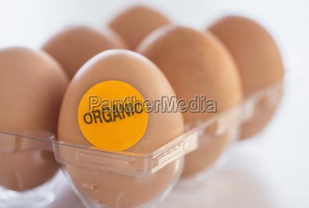 studio shot of organic eggs