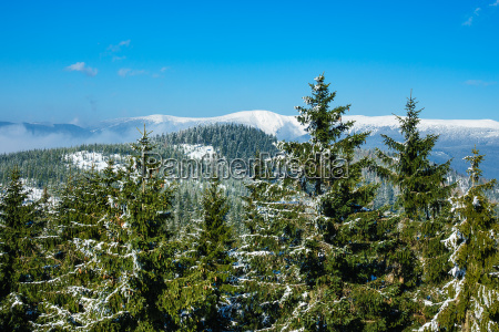 winter in the giant mountains near
