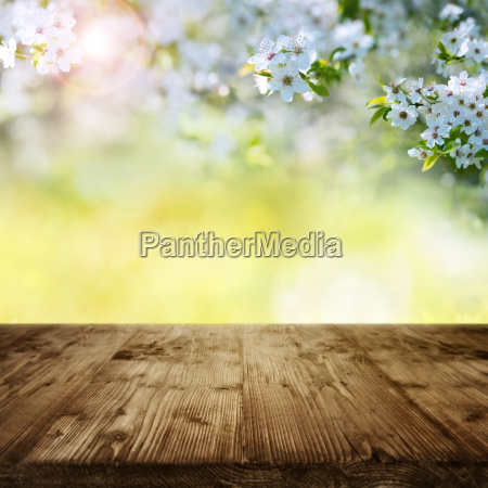 cherry blossoms in garden with wooden