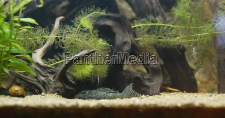 aquarium with freshwater fish tank