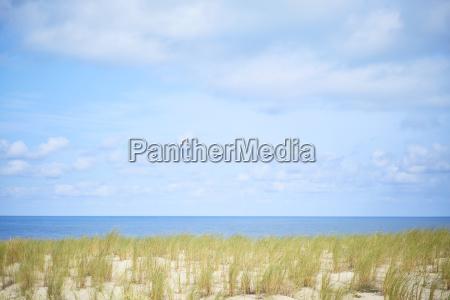 dune beach grass sun