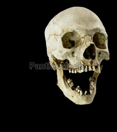 fiberglass human skull with mouth wide