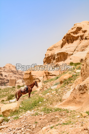 the covered horse resting on a