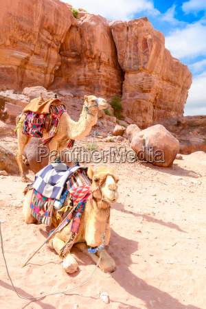 two camels in the desert wadi