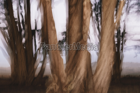 blurred motion gnarly cypress trees at
