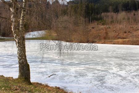 thin ice sheet on the frozen