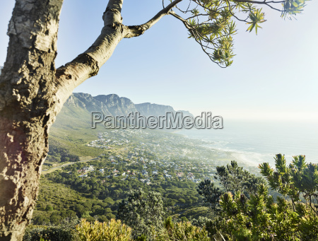 south africa western cape lions head