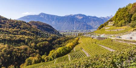 switzerland canton vaud aigle vineyard