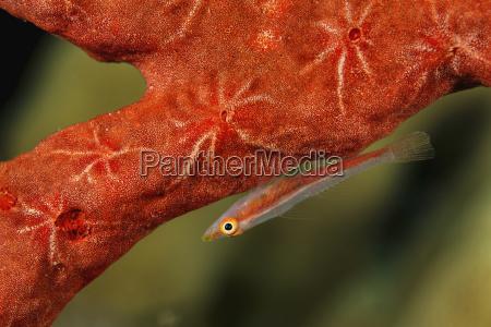 egypt red sea hurghada michels host
