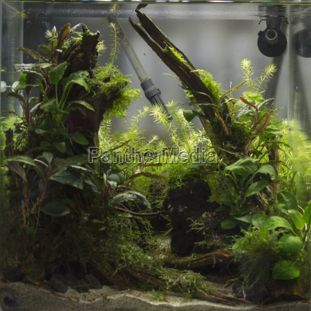 planted freshwater aquarium with fishes