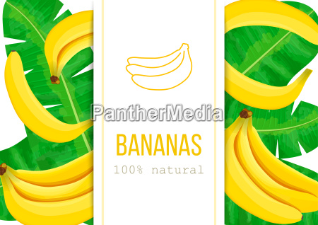 ripe bananas and palm leaves with