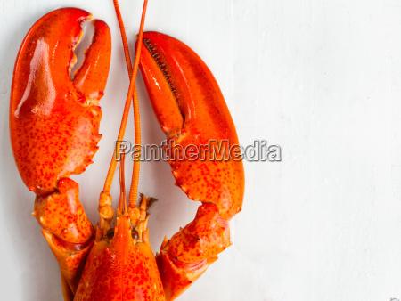 hummer kogt krebsdyr fisk og skaldyr