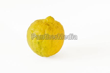 single wild lemon on white