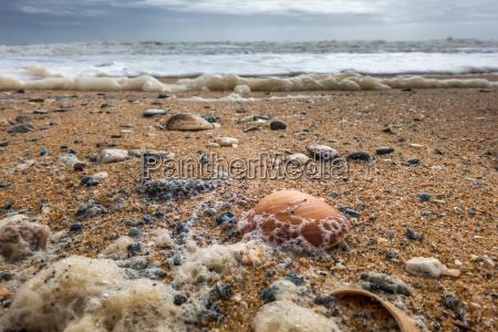 shells on the beach at quarteira