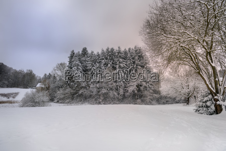 little forest in a snowy landscape