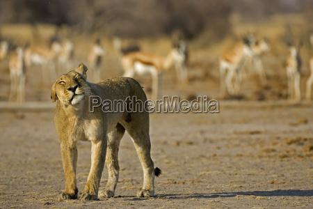 female park animal mammal wild africa