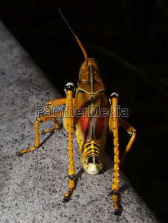 closeup stone animal insect insects animals