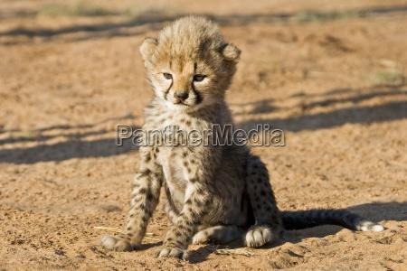 animal mammal africa animals namibia big